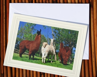 No Butts About It, Llama Photo Greeting Card, Blank