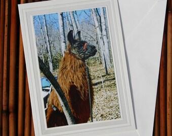 Pack Llama, Photo Greeting Card