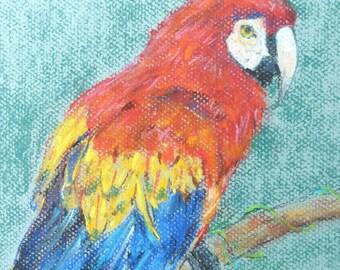 Free Shipping -  Bird Parrot Macaw (Original Pastel Chalk Drawing)