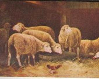 Vintage Postcard 1907 Sheep in a Maneger