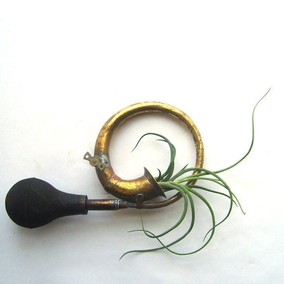 Antique Auto Horn : Antique brass car horn with air plant by sweetlovevintage