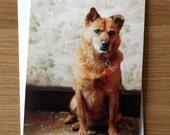 Bambi - Mutt, Single Dog Portrait Notecard