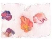 Water Colour Print - Rose 2 by Yumi Takahashi, 2009