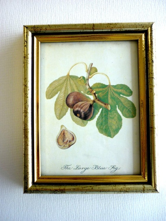 Vintage Picture with Botanic Illustration