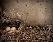 Here, Together 11x14 Nest and Eggs Fine Art Photography Rustic Decor