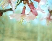 The friendliest flower.  8x10 fine art MATTE photography print
