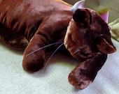 A Sable Brown Velvet Cat
