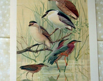 Vintage Bird Prints 3 Pieces 1960's