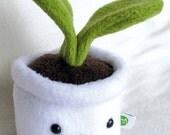 Plant - white pot