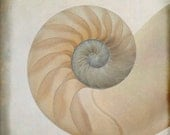 nautilus ... ocean sea shell photograph square beach print