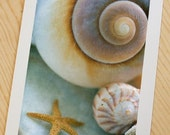 Sea Dream... soft ocean fine art sea shells photograph by Lauren Dinneweth