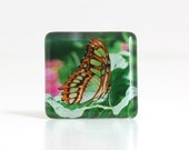 butterfly's life glass tile magnet