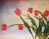 wherever you go I will follow- sunrise tulips photograph... red with golden pink and purple by leapinggazelle