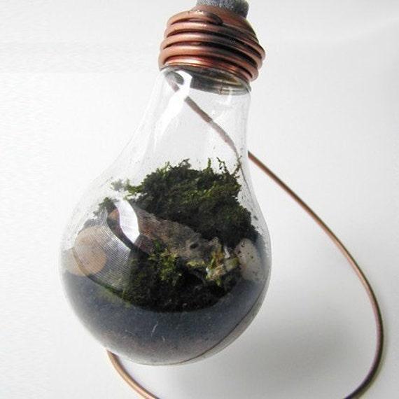 Plain 25 watt Moss Terrarium