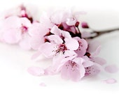Light pink dreamy blooming plum  flowers blank note card with embossed embelishment and matched envelope
