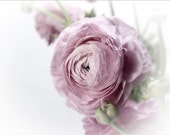 Pink Ranunculus blank photo note card spring flower lavender white birthday, mothers day gift , wedding, any occasion. tbteam, rusteam, oht