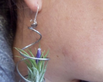 Pair of Air Plant Earrings