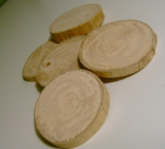 5 Sycamore tree Branch Slices 1.5 inch