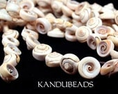 Spiral Shell beads, Nautilus cone, Natural,15mm 15 inch (aprox 25 beads)
