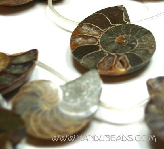 AMMONITE (ammolite) halved Fossil shell Beads 9 BIG focal beads 35-50mm ALL NATURAL --- VERY RARE
