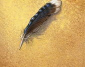 blue jay feather- archival giclee print on wood board