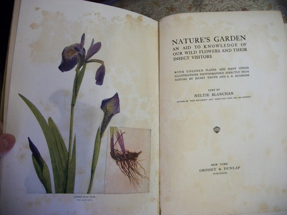 Vintage 1900 Illustrated Nature's Garden Reference Book from Rustysecrets