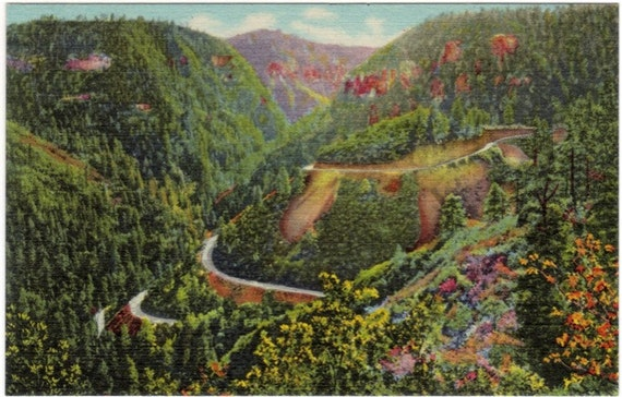 Vintage Arizona Postcard - In Oak Creek Canyon (Unused)