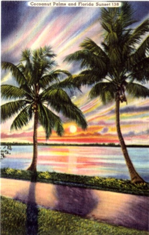 Vintage Florida Postcard - Coconut Palms and Florida Sunset (Unused)