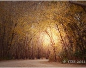 Autumn Timber Road Photographic Print  - Woodland Photo -   Wooded Road - Landscape Photography - Nature