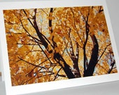 Autumn Wonder III - Photograph Blank Note Card