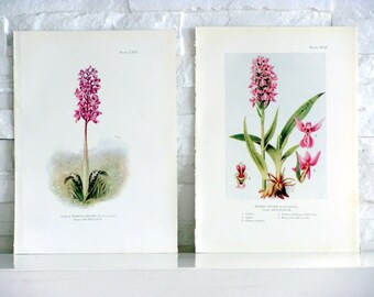 Orchids, Antique English Prints n1