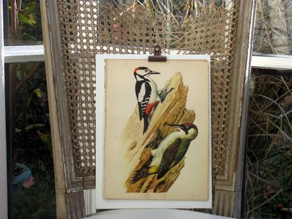 Woodpeckers, Original Vintage Plate