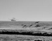 Pelicans and Shrimp Boat