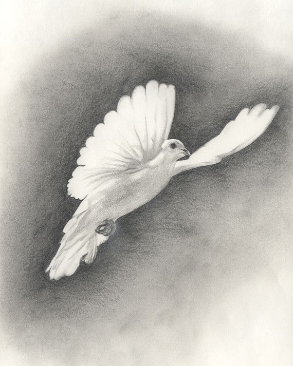 White Doves Drawings White Dove Original Drawing