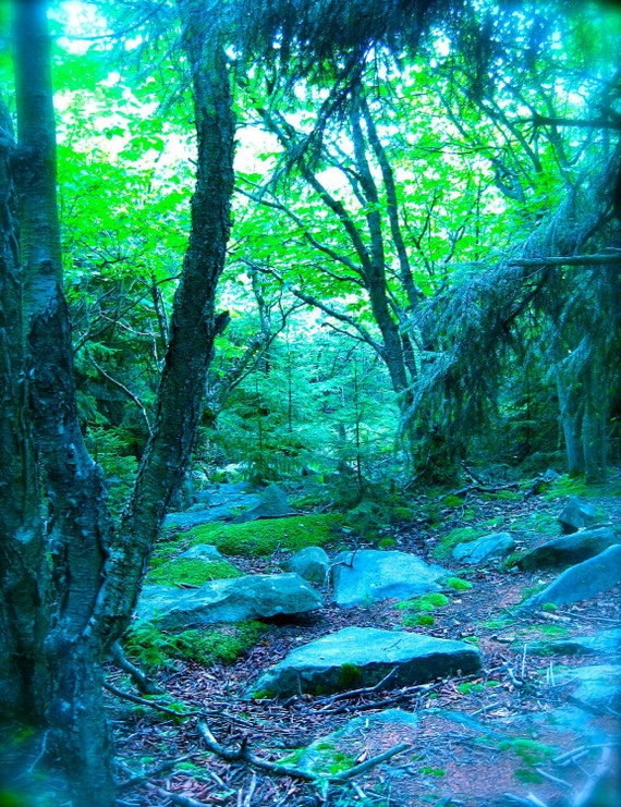 Dream Forest print, enchanted forest Dolly Sods