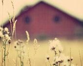 Vintage Barn - Fine Art Photograph - rustic rural countryside farm home decor print