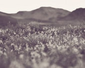In The Desert - 8 x 8 Fine Art Photograph