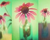 The Coneflowers Set of 3 Fine Art Photographs - pink green mint peridot flower floral series collection shabby chic home decor print
