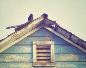 Blue Barn - Square Fine Art Photograph - blue rustic barn architecture nostalgic retro wood farm home decor print
