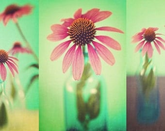 The Coneflowers Set of Three Fine Art Photographs - pink honeysuckle spring floral home decor print set