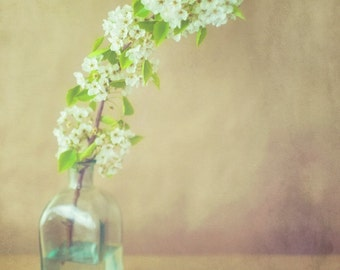 Blossom - 11 x 14 Fine Art Photograph - green white brown texture bottle nostalgic nature home decor print