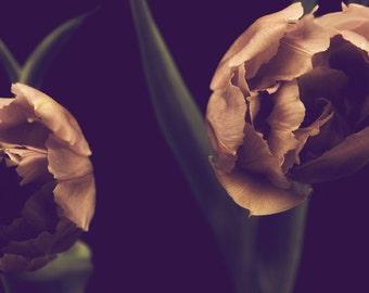 The Tulips II - Fine Art Photograph - dramatic pink green black flower floral modern home decor print
