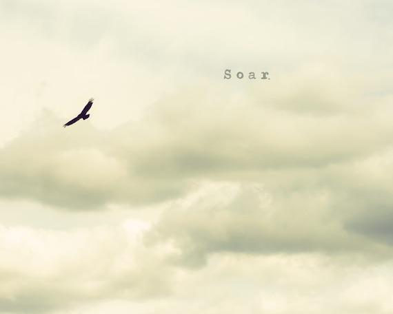Soar - Fine Art Photograph - grey gray bird nature clouds neutral unisex home decor print