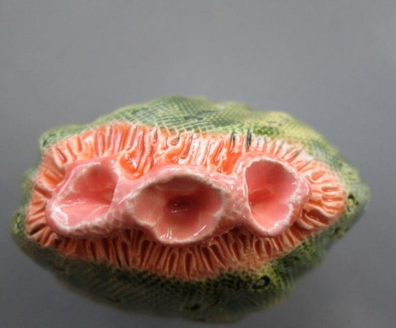 Small Cactus Flower Pod with Melon and Orange Bloom