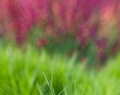 Green pink flower photograph 5x5 print - Dreaming of Monet II