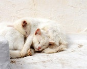 White Cats Fine Art Print