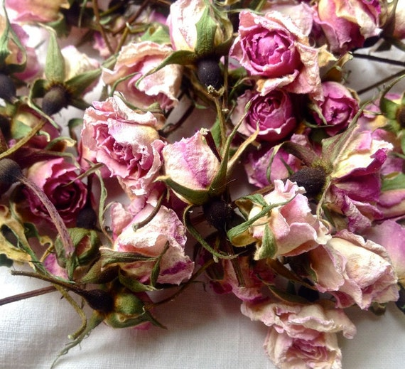 Dried Rosebuds Miniature Cecile Brunner Pink Roses Organic from My Oregon Garden.