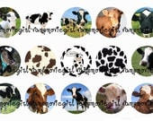 INSTANT DOWNLOAD...Cows 1 Inch Circle Images Collage Sheet for Bottle Caps ...Buy 3 get 1