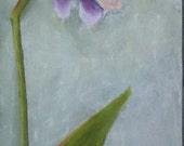 Orchids - Fine Art Print