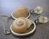 Snail Shell  with Niobium Ear Wire Earrings